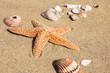 Seestern und Muscheln am Strand