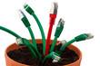 Netzwerk Kabel in Blumentopf