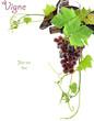 vigne, vin