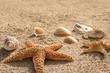 Sandstrand mit Seesternen und Muscheln