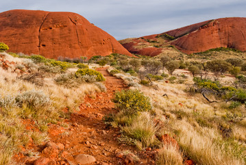 Wild nature in the Australian outback