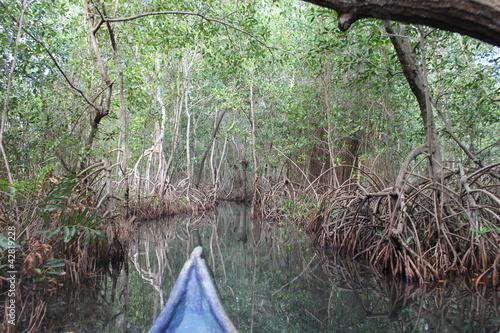 Canoa en  selva