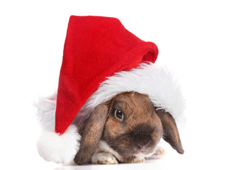 Lop-eared rabbit in cap of Santa Claus isolated on white