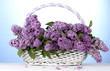 beautiful lilac flowers in basket on blue background