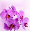 Fototapeten,rosa,orchidee,blume,abstrakt