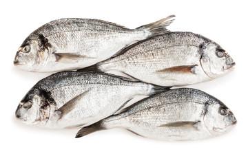 Gilthead fish food