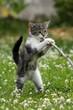 Katzenwelpe steht am Stock