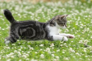 Katzenwelpe auf Jagd