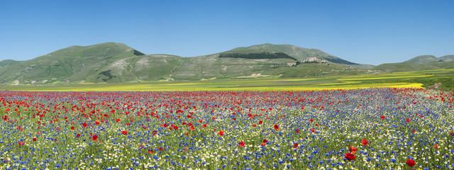 Fioritura Castellucio Italia  2012