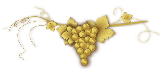 uva d'oro
