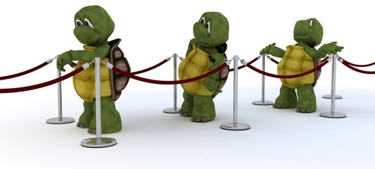 tortoises waiting in line