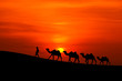 camel caravan sillhouette with sunset