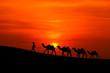 Fototapeten,afrika,afrikanisch,tier,arabe