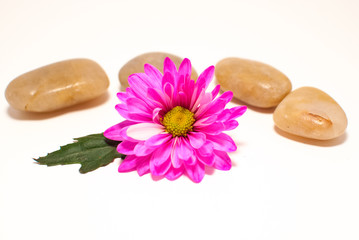 Spa- Pink Daisy and Stones