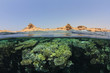 Red Sea Coral Reef and Sinai Desert in Egypt