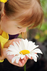 Beautiful camomile flower in the hands of pretty little girl