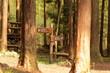 森林公園内の案内板