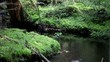 small creek in the green forest