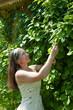 female gardener in  lemongrass plant