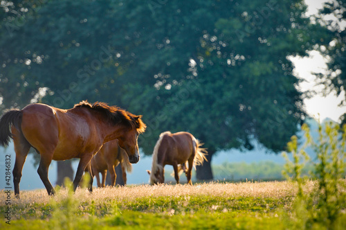A wild horse head profile portrait