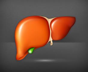 Human liver, vector