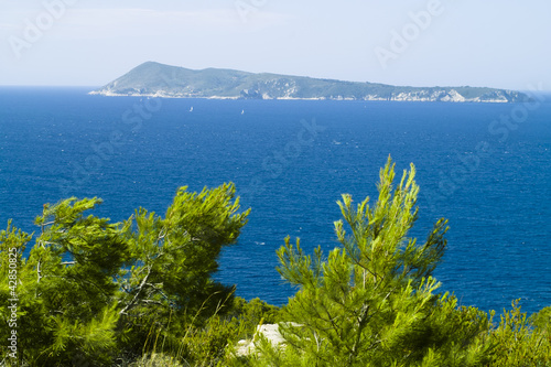 Bisevo island and pines on the wind