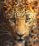 Fototapeta Twarz leoparda