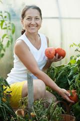 Mature woman picking  tomatoes