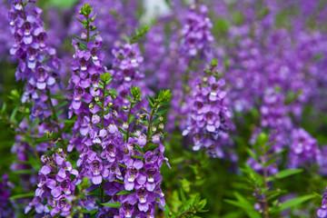 Purple flowers.