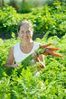 Mature woman picking fresh carrots