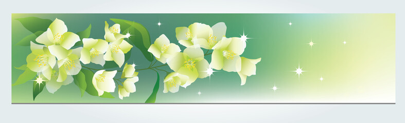 Flower vector background  with jasmine.