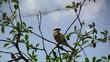 Bird Robin