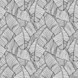 Fototapety Vector illustration leaves of palm tree. Seamless pattern.