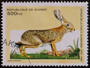 francobollo guinea
