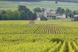 Vineyards near to beaune