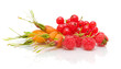 rosehip berries, raspberries and red currants on a white backgro