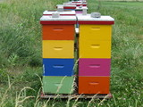 Stacks of rainbow coloured bee hives