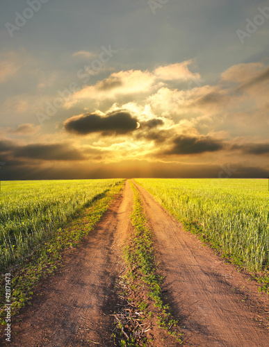 rural landscape with a road