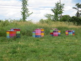 Field with colourful beehives