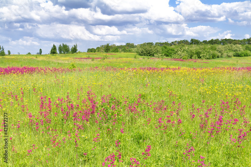 Spring flower field and  sky with clouds