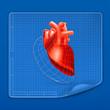 Heart structure blueprint