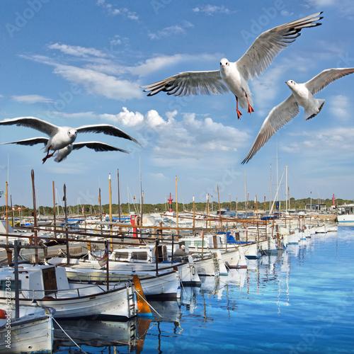 Hafen von Mallorca mit Möwen