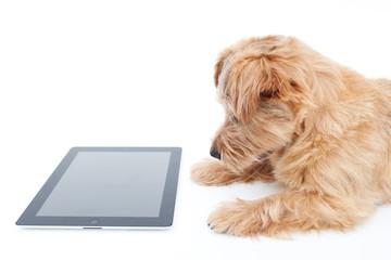 タブレットPCを見る犬