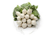 Bunch of white radish