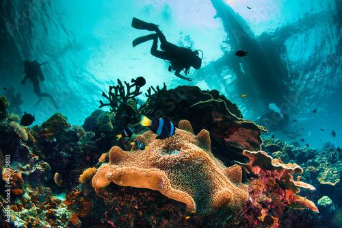Busy Sea Scape - 42879810