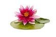 Leinwanddruck Bild - water lily on white beautiful flower