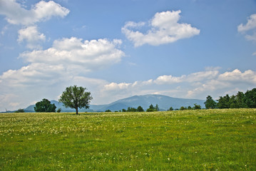Summer landscape with  mountains, trees,  blue sky and clouds