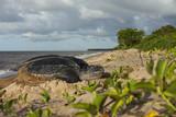 Tortue luth sur son site de ponte en Guyane Française