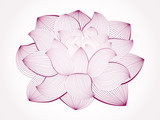 Vector lotus flower isolated on white