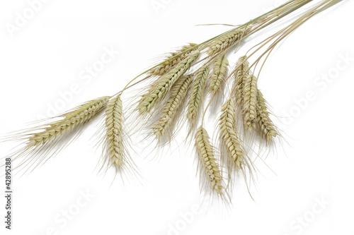 Leinwanddruck Bild Roggen (Secale cereale)